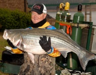 Mark Rose Striper Douglas Lake