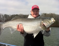 Lake Lanier Mark Rose Striper
